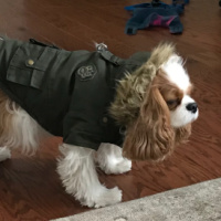 Our Toby Came From Cavalier Rescue USA
